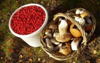 Збирання грибів та ягід