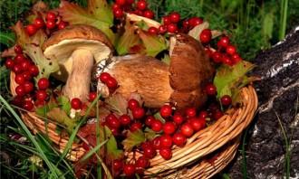Ягоди та гриби